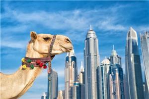 19 Dubai  i Abu Dhabi